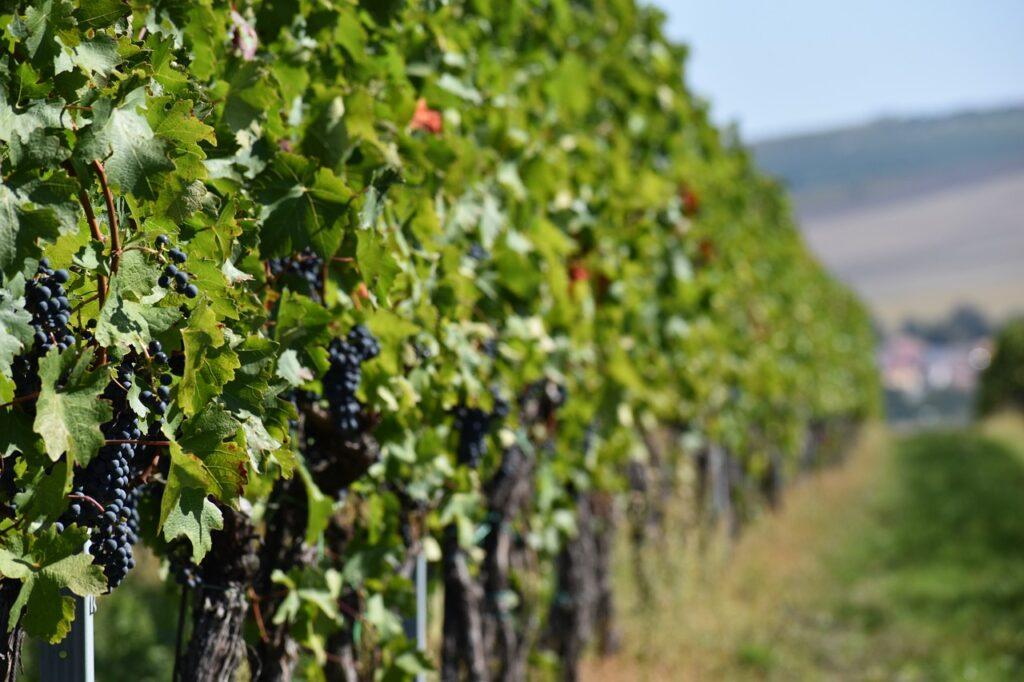 enoturismo, vino green