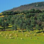 Paesaggi rurali