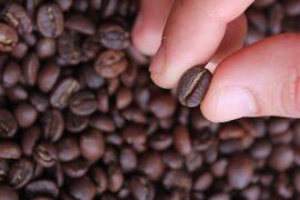 espresso,