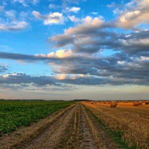 siccità, Distretti del cibo, Fiera Agricola, agricoltura biologica, Cultum Change, sistemi, alimentari, sostenibilità, agricoltura e allevamenti sostenibili