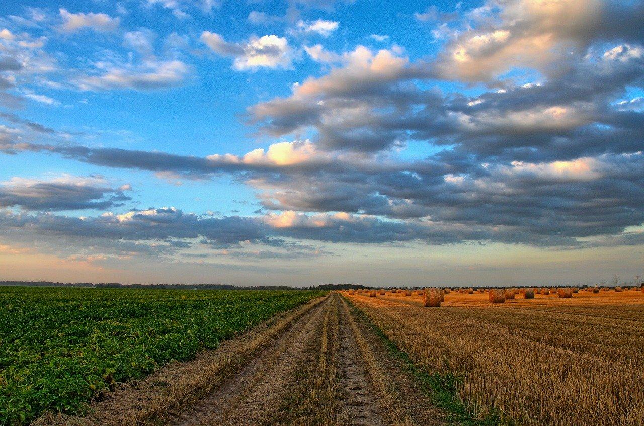 Fiera Agricola, agricoltura biologica, Cultum Change, sistemi, alimentari, sostenibilità, agricoltura e allevamenti sostenibili