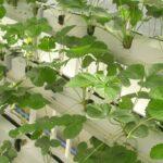 Foodtech, politica agricola comune
