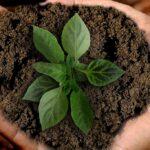 design sostenibile per il sistema alimentare