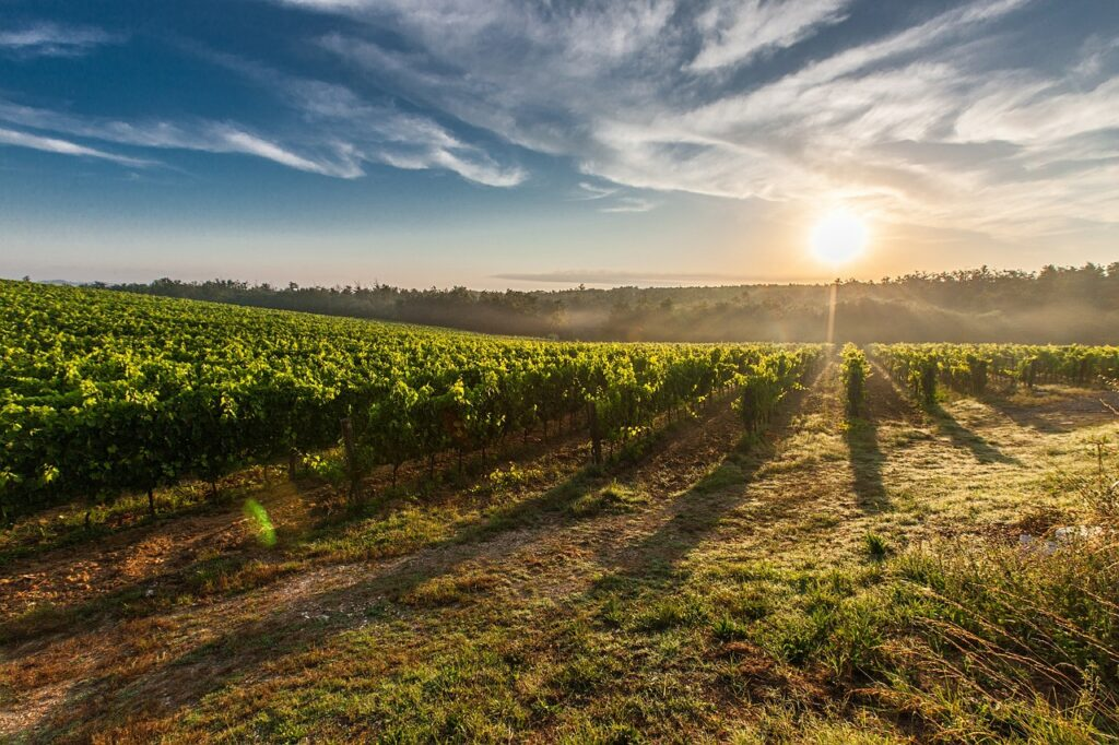 brunello di montalcino, Cantine aperte, vigne aperte