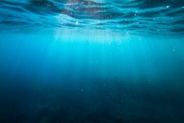 Sealogy